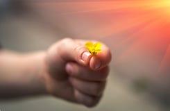 Ręka daje dzikiego kwiatu z miłością przy zmierzchem romans Zdjęcia Royalty Free