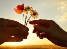 Ręka daje kwiaty z miłością przy zmierzchem Fotografia Royalty Free