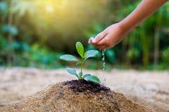 Ręka daje wodnego drzewa W rękach drzewa r rozsady Bokeh zielenieje tło ręki mienia Żeńskiego drzewa na natury pola gras Obrazy Royalty Free