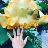 Ręka i kwiat fotografia royalty free