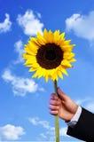 Ręka i słonecznik Obrazy Stock