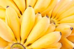 Ręka Jajeczni banany na białego tła Pisang Mas zdrowym Bananowym owocowym jedzeniu odizolowywającym Obraz Royalty Free