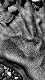 Ręka jak plaża obraz stock