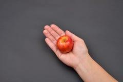 Ręka kobieta trzyma czerwonego świeżego jabłka odizolowywający na czerń plecy Zdjęcia Stock