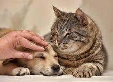 Ręka, kot i szczeniak, Obraz Royalty Free