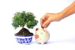 Ręka ludzie trzyma monetę i kroplę w prosiątko banka beside zdjęcie royalty free