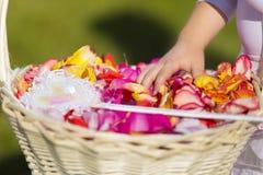 Ręka mała dziewczynka z palcami w różanych płatkach Zdjęcie Royalty Free
