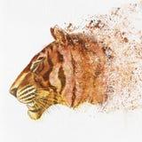 Ręka Malująca tygrys głowa na papierze royalty ilustracja