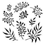 Ręka malujący abstrakcjonistyczni akwarela liście i gałąź Zdjęcia Royalty Free