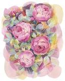 Ręka malujący akwarela bukiet z różami Sztuki ilustracja obrazy royalty free