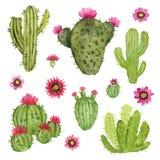Ręka malujący kaktusy z kwiatami Zdjęcia Royalty Free