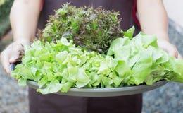 Ręka na grupie sałatkowy warzywo Zdjęcie Stock