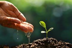 Ręka nawadnia młodej rośliny rolnik zdjęcia stock