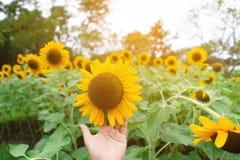 Ręka niesie wypięknia słońce przepływ w uroczym dnia odczuciu relaksuje zdjęcia stock
