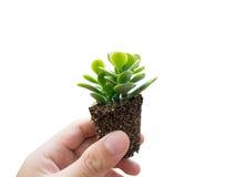 ręka odizolowywająca roślina Fotografia Stock