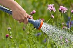 Ręka ogrodniczki podlewanie kwitnie w ogródzie fotografia royalty free