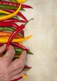 Ręka podnosi up gorącego chili pieprzu Obraz Royalty Free