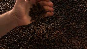 Ręka Podnosi Up Kawowych fasoli zwolnione tempo zbiory