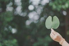 Ręka przynosi liść zdjęcie stock