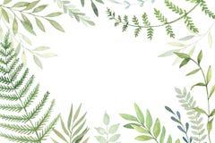 Ręka rysująca akwareli ilustracja Botaniczna rama z zielenią l ilustracja wektor