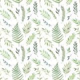 Ręka rysująca akwareli ilustracja Botaniczny tło z gr Obrazy Stock