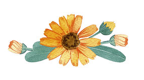 Ręka rysująca bukiet kwiaty Zdjęcia Stock