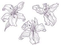Ręka rysująca ciemna lila leluja Kreskowa doodling sztuka royalty ilustracja