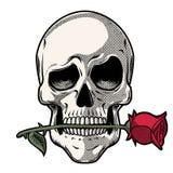 Ręka Rysująca czaszka z różą ilustracja wektor