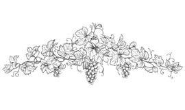 Ręka Rysująca dekoracja z winogronami ilustracja wektor
