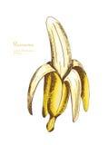 Ręka rysująca ilustracja żółty owocowy banan Fotografia Royalty Free