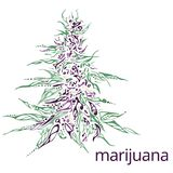 Ręka rysująca ilustracja marihuana Zdjęcie Stock