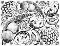 Ręka Rysująca Indiański agresta i Custard Apple tło ilustracja wektor