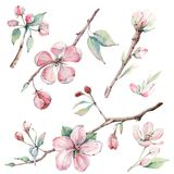 Ręka rysująca jabłoń rozgałęzia się i kwiaty, kwitnący drzewo ilustracja wektor