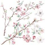 Ręka rysująca jabłoń rozgałęzia się i kwiaty, kwitnący drzewo ilustracji