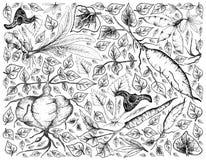 Ręka Rysująca Korzeniowy i Tuberous warzywa tło Zdjęcie Stock