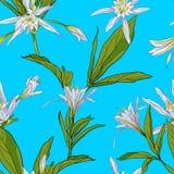 Ręka Rysująca Kwitnie leluje na białym tle Bezszwowym Zdjęcie Stock