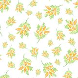 R?ka rysuj?ca mimoza kwitnie bezszwowego deseniowego t?o ilustracja wektor