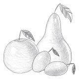 Ręka rysująca owocowa ilustracja Obraz Royalty Free