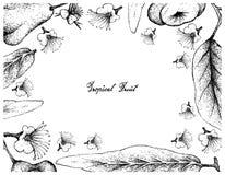 Ręka Rysująca rama Jawa i Załzawiony Różany Apple Fotografia Stock
