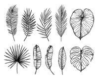 Ręka rysująca wektorowa ilustracja - palma opuszcza monstera, areki pa Zdjęcie Royalty Free