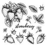 Ręka rysująca wektorowa ilustracja - truskawka set ilustracji