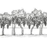 Ręka rysująca wektorowa ilustracja winnica ilustracja wektor