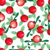 Ręka rysujący akwarela bezszwowy wzór Cranberries Obrazy Stock