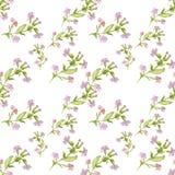 Ręka rysujący akwarela botaniczny bezszwowy wzór pole menchie kwitnie z liśćmi na białym tle royalty ilustracja