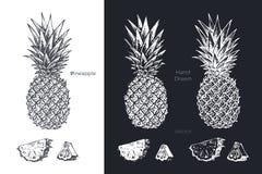 Ręka rysujący ananas Owoc nakreślenia wektoru set royalty ilustracja