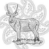 Ręka rysujący antylopy doodle Paisley stresu uwolnienia kolorystyki strony zwierzęcy dorosły zentangle Zdjęcie Stock