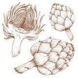 Ręka rysujący arichoke Obrazy Stock