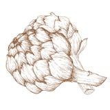 Ręka rysujący arichoke Zdjęcie Royalty Free