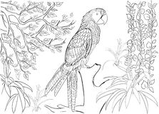 Ręka rysujący atramentu wzór Kolorystyki książki kolorystyka dla dorosłej strony dla kolorystyki książki: bardzo relaksujący i ci Obrazy Royalty Free