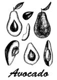 Ręka rysujący avocado set Set avocados od kawałków, kości i różnych pozycj owoc, Tropikalna owoc royalty ilustracja